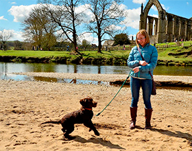 Bolton Abbey dog on beach