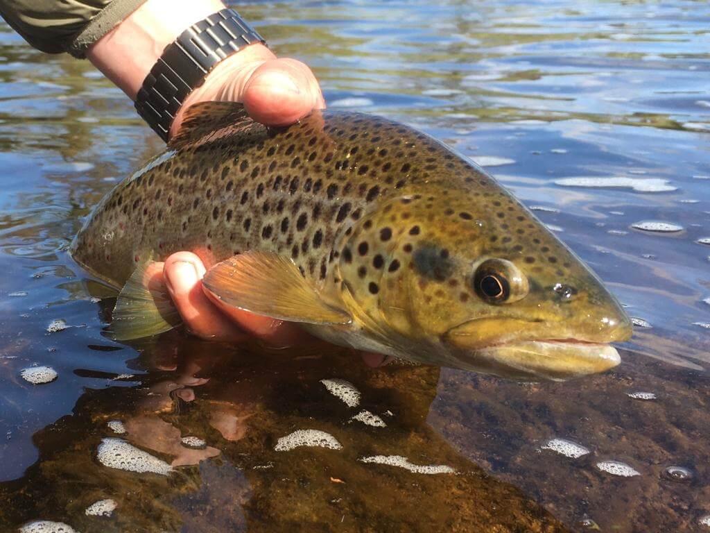bolton abbey fishing main optimised